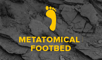 METATOMICAL FOOTBED DESIGN